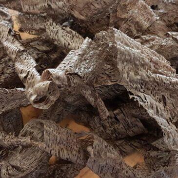 Bog Oak Wood Shavings from a plane
